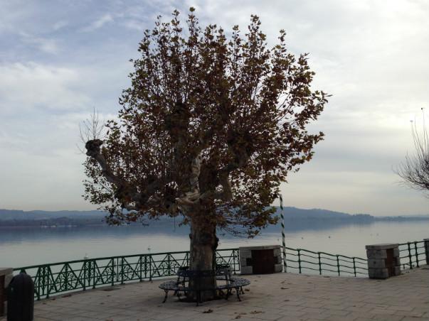 Promenaden i Arona ved søen Lago Maggiore.