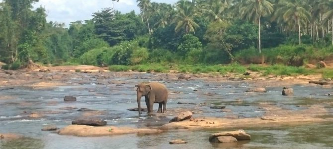 Sri Lanka er det nye sort